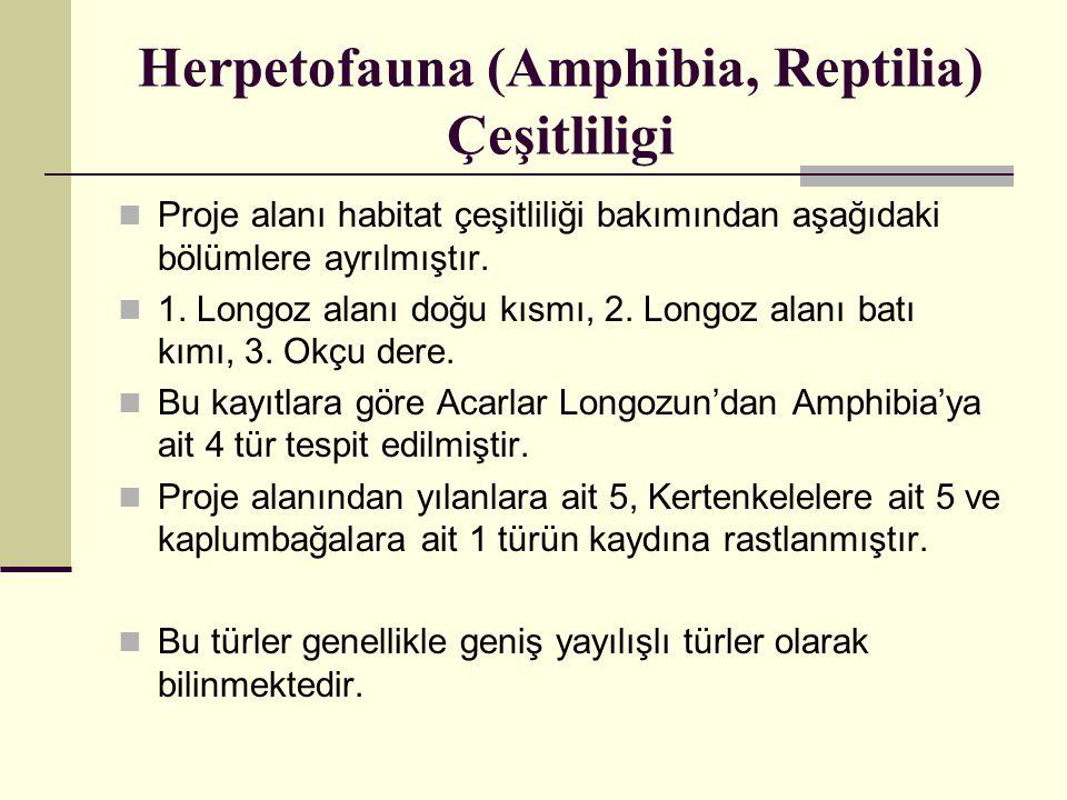 Herpetofauna (Amphibia, Reptilia) Çeşitliligi  Proje alanı habitat çeşitliliği bakımından aşağıdaki bölümlere ayrılmıştır.  1. Longoz alanı doğu kıs