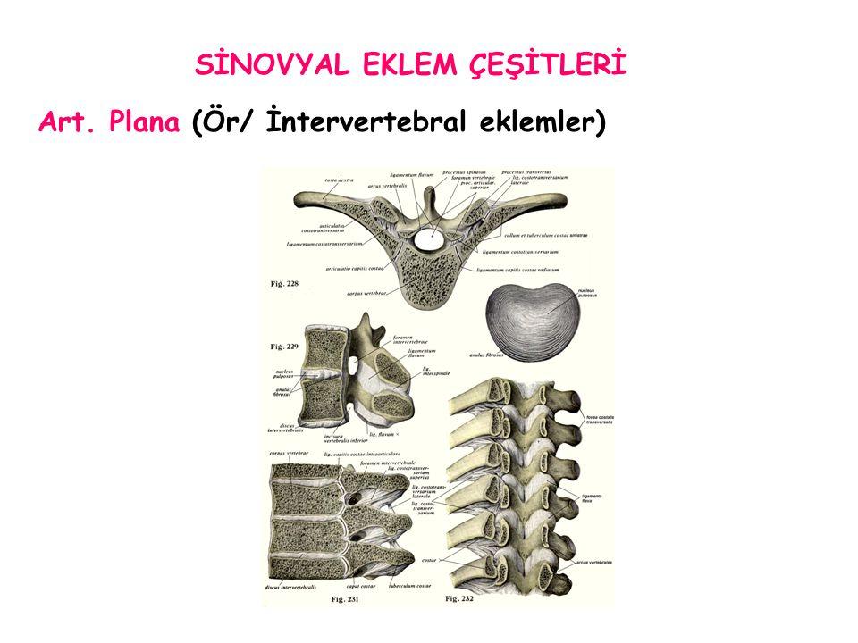 Tek Eksenliler *Ginglymus-Trochlear (Ör/ Diz eklemi) *Trochoid-Pivot (Ör/ Art.