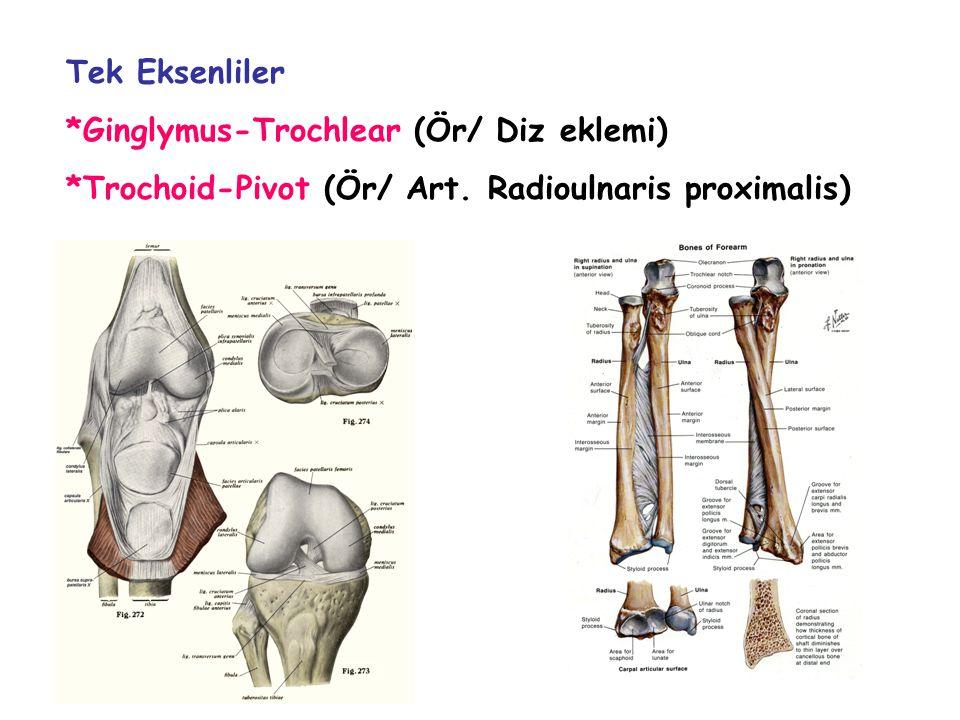 Tek Eksenliler *Ginglymus-Trochlear (Ör/ Diz eklemi) *Trochoid-Pivot (Ör/ Art. Radioulnaris proximalis)