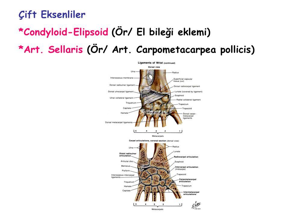 Çift Eksenliler *Condyloid-Elipsoid (Ör/ El bileği eklemi) *Art. Sellaris (Ör/ Art. Carpometacarpea pollicis)