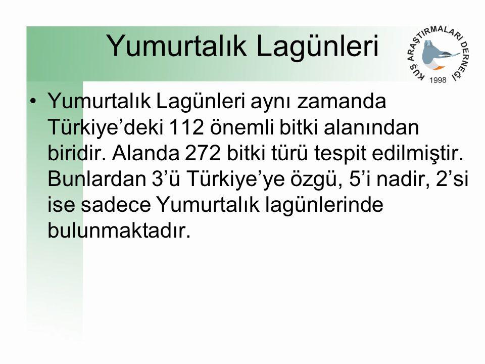 Yumurtalık Lagünleri •Yumurtalık Lagünleri aynı zamanda Türkiye'deki 112 önemli bitki alanından biridir.