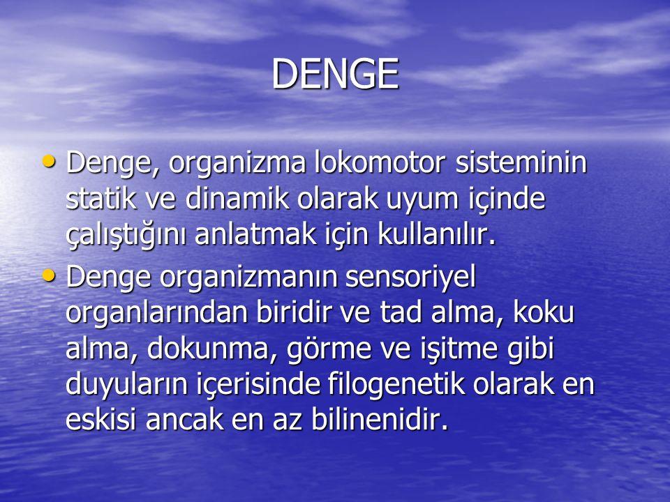 DENGE • Denge, organizma lokomotor sisteminin statik ve dinamik olarak uyum içinde çalıştığını anlatmak için kullanılır. • Denge organizmanın sensoriy