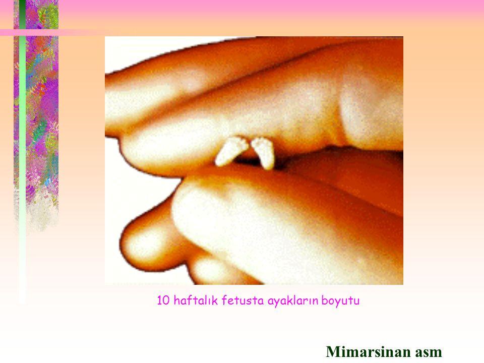  Gebelik Hamile Kadınlarda Zarasız Olan Aşılar: Tetanoz İnfluenza ( grip ) Çocuk Felci ( ölü IPV ) Kolera Hepatit B Yalnızca Gerekli Durumlarda Yapılması Gereken Aşılar: BCG Boğmaca Difteri Kızamık Meningokok Pnömokok Kuduz Kabakulak Hamile Kadınlara Yapılmaması Gereken Aşılar: Çocuk Felci ( canlı TOPV ) Kızamıkçık