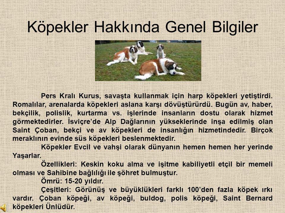Köpekler Hakkında Genel Bilgiler Pers Kralı Kurus, savaşta kullanmak için harp köpekleri yetiştirdi. Romalılar, arenalarda köpekleri aslana karşı dövü