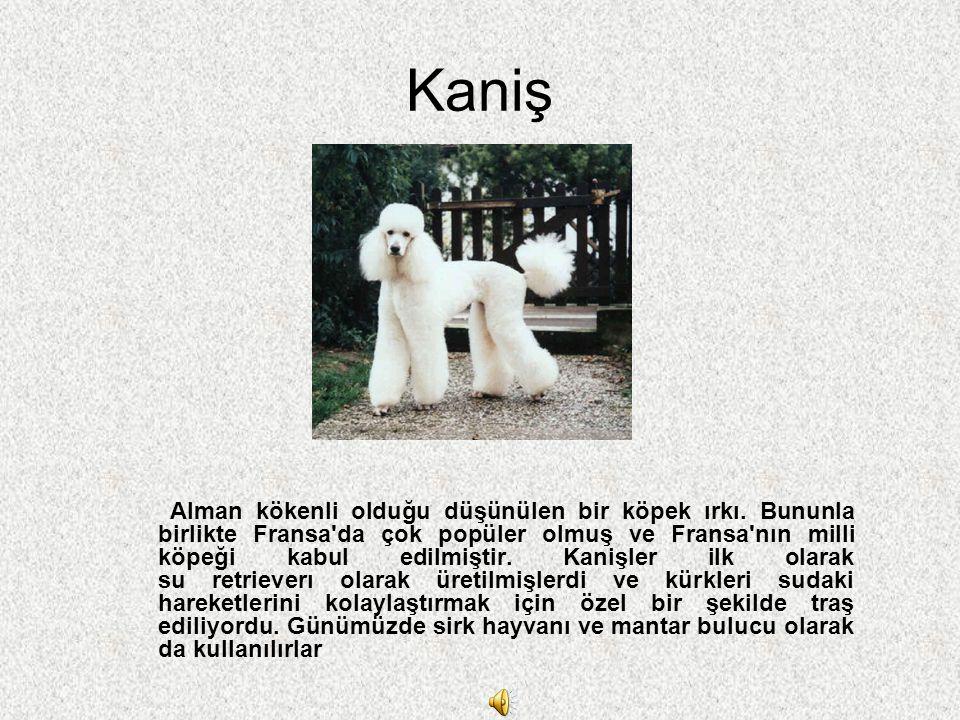 Kaniş Alman kökenli olduğu düşünülen bir köpek ırkı. Bununla birlikte Fransa'da çok popüler olmuş ve Fransa'nın milli köpeği kabul edilmiştir. Kanişle