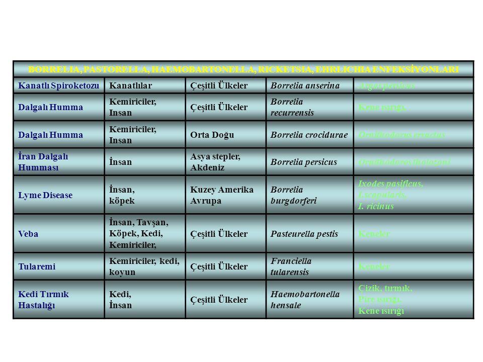 BORRELIA, PASTORELLA, HAEMOBARTONELLA, RICKETSIA, EHRLICHIA ENFEKSİYONLARI Kanatlı SpiroketozuKanatlılarÇeşitli ÜlkelerBorrelia anserinaArgas persicus