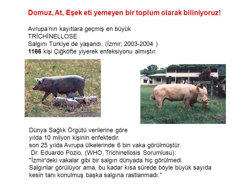 Domuz, At, Eşek eti yemeyen bir toplum olarak biliniyoruz! Avrupa'nın kayıtlara geçmiş en büyük TRİCHİNELLOSE Salgını Türkiye de yaşandı. (İzmir; 2003