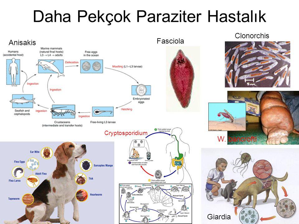 Daha Pekçok Paraziter Hastalık Giardia Cryptosporidium W. bancrofti Fasciola Anisakis Clonorchis