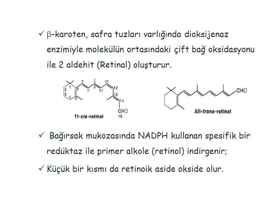   -karoten, safra tuzları varlığında dioksijenaz enzimiyle molekülün ortasındaki çift bağ oksidasyonu ile 2 aldehit (Retinal) oluşturur.  Bağırsak