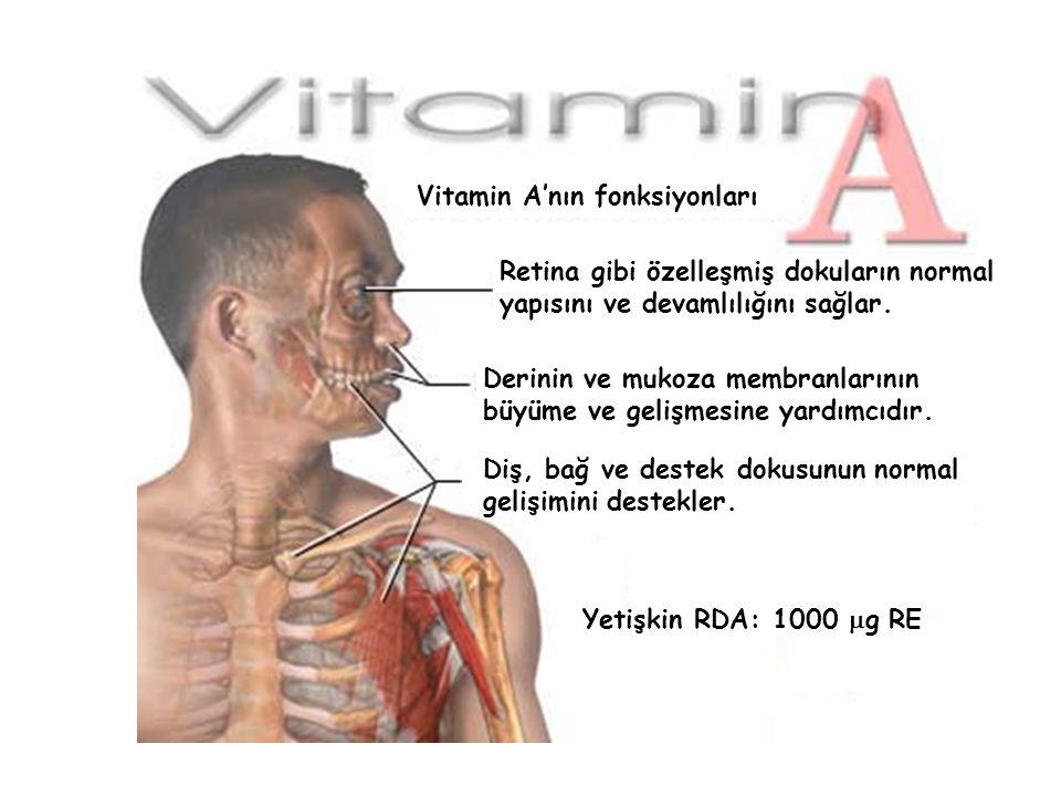 Retina gibi özelleşmiş dokuların normal yapısını ve devamlılığını sağlar. Vitamin A'nın fonksiyonları Derinin ve mukoza membranlarının büyüme ve geliş