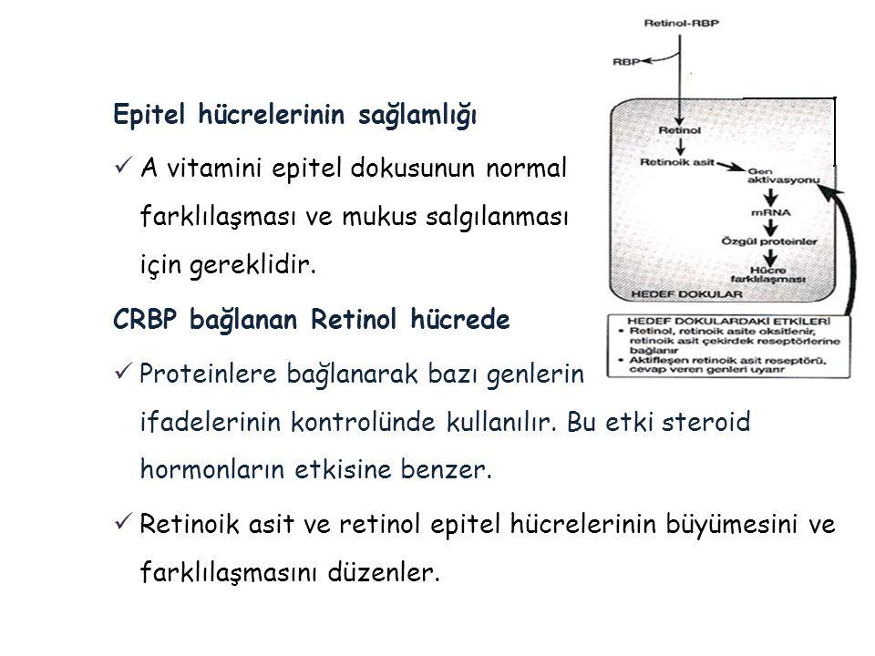Epitel hücrelerinin sağlamlığı  A vitamini epitel dokusunun normal farklılaşması ve mukus salgılanması için gereklidir. CRBP bağlanan Retinol hücrede