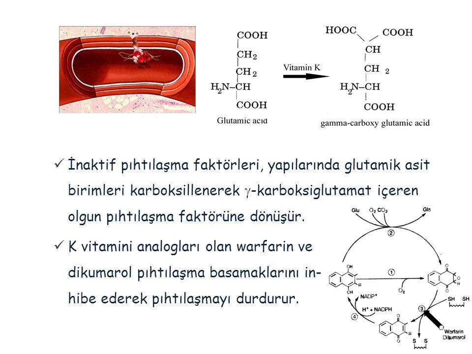 İnaktif pıhtılaşma faktörleri, yapılarında glutamik asit birimleri karboksillenerek  -karboksiglutamat içeren olgun pıhtılaşma faktörüne dönüşür. 