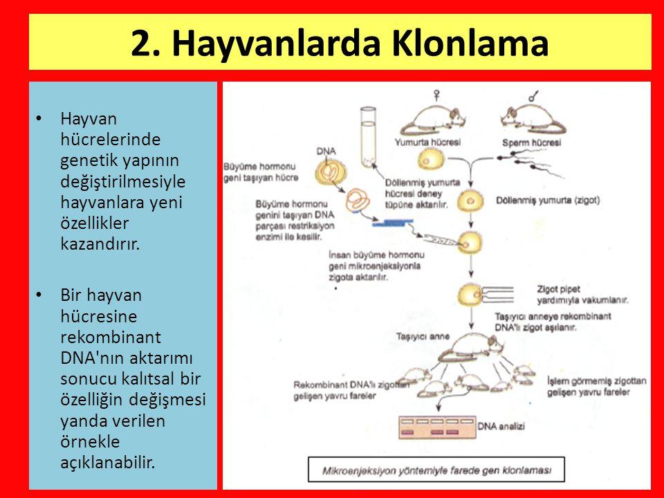 2. Hayvanlarda Klonlama • Hayvan hücrelerinde genetik yapının değiştirilmesiyle hayvanlara yeni özellikler kazandırır. • Bir hayvan hücresine rekombin