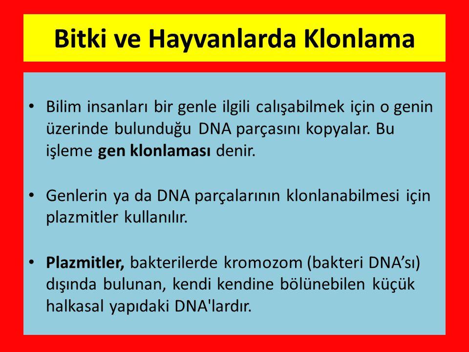 Bitki ve Hayvanlarda Klonlama • Bilim insanları bir genle ilgili calışabilmek için o genin üzerinde bulunduğu DNA parçasını kopyalar.