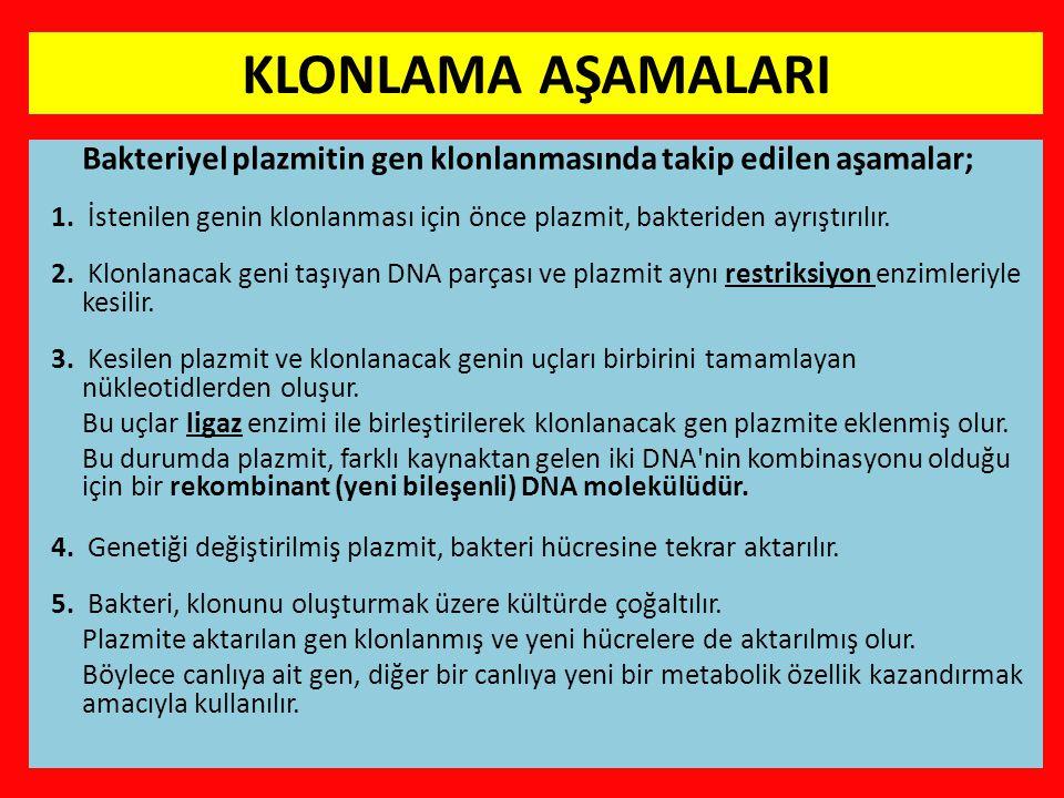 KLONLAMA AŞAMALARI Bakteriyel plazmitin gen klonlanmasında takip edilen aşamalar; 1.