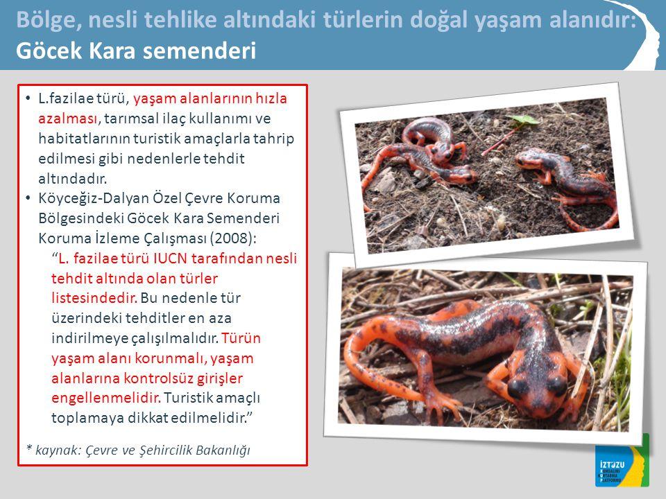 • L.fazilae türü, yaşam alanlarının hızla azalması, tarımsal ilaç kullanımı ve habitatlarının turistik amaçlarla tahrip edilmesi gibi nedenlerle tehdit altındadır.