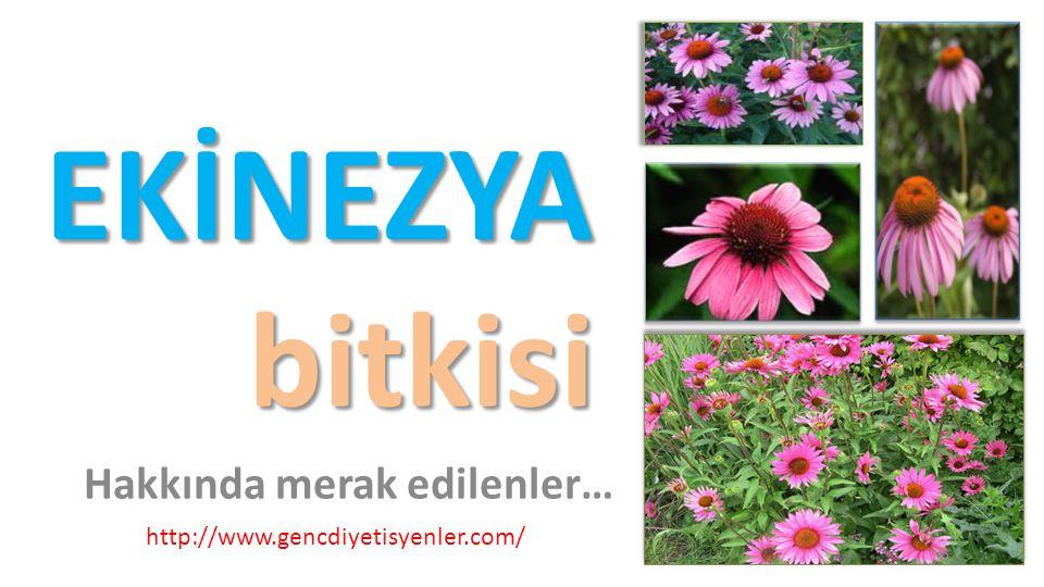 EKİNEZYA bitkisi Hakkında merak edilenler… http://www.gencdiyetisyenler.com/