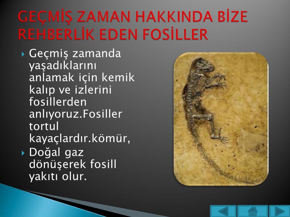  Geçmiş zamanda yaşadıklarını anlamak için kemik kalıp ve izlerini fosillerden anlıyoruz.Fosiller tortul kayaçlardır.kömür,  Doğal gaz dönüşerek fos