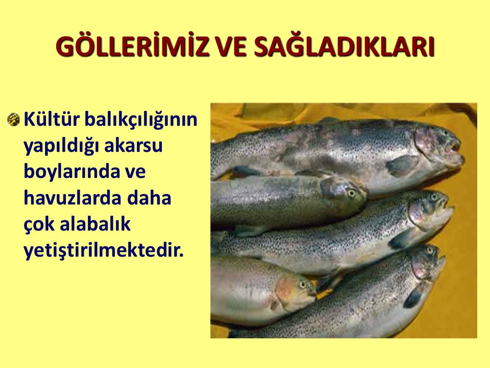 GÖLLERİMİZ VE SAĞLADIKLARI Kültür balıkçılığının yapıldığı akarsu boylarında ve havuzlarda daha çok alabalık yetiştirilmektedir.