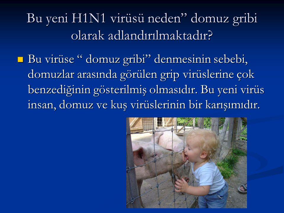 """Bu yeni H1N1 virüsü neden"""" domuz gribi olarak adlandırılmaktadır?  Bu virüse """" domuz gribi"""" denmesinin sebebi, domuzlar arasında görülen grip virüsle"""