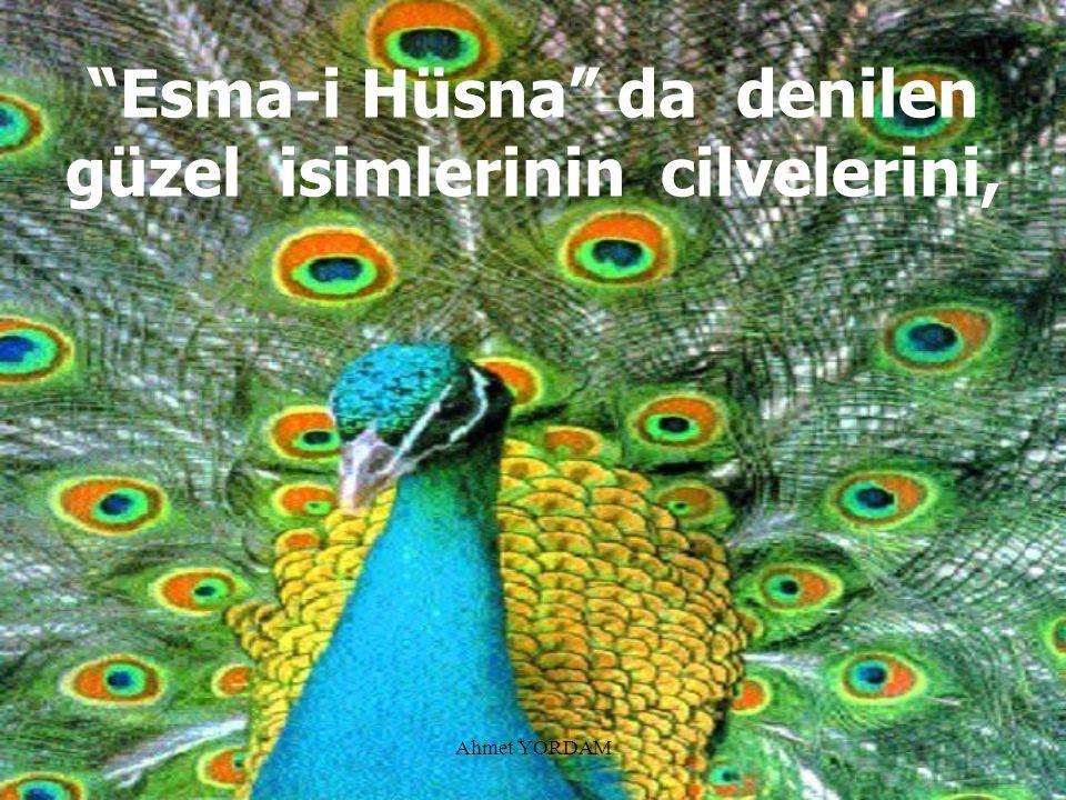 Ahmet YORDAM Cemâlini (Sonsuz Güzelliğini), Kemâlini (Sonsuz Mükemmelliğini),