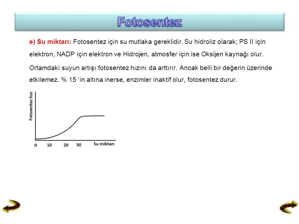e) Su miktarı: Fotosentez için su mutlaka gereklidir. Su hidroliz olarak; PS II için elektron, NADP için elektron ve Hidrojen, atmosfer için ise Oksij