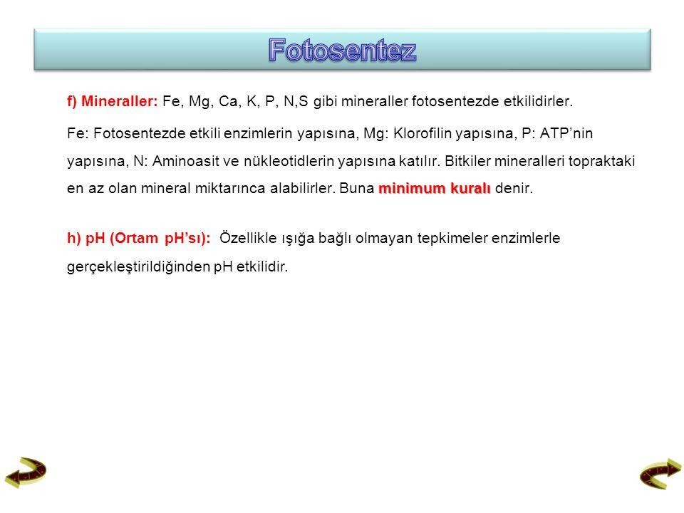 f) Mineraller: Fe, Mg, Ca, K, P, N,S gibi mineraller fotosentezde etkilidirler. minimum kuralı Fe: Fotosentezde etkili enzimlerin yapısına, Mg: Klorof