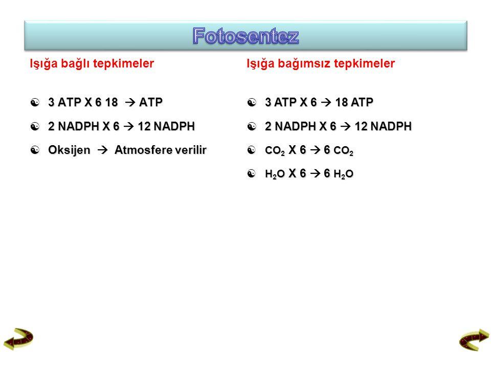 Işığa bağlı tepkimeler  3 ATP X 6 18  ATP  2 NADPH X 6  12 NADPH  Oksijen  Atmosfere verilir Işığa bağımsız tepkimeler  3 ATP X 6  18 ATP  2