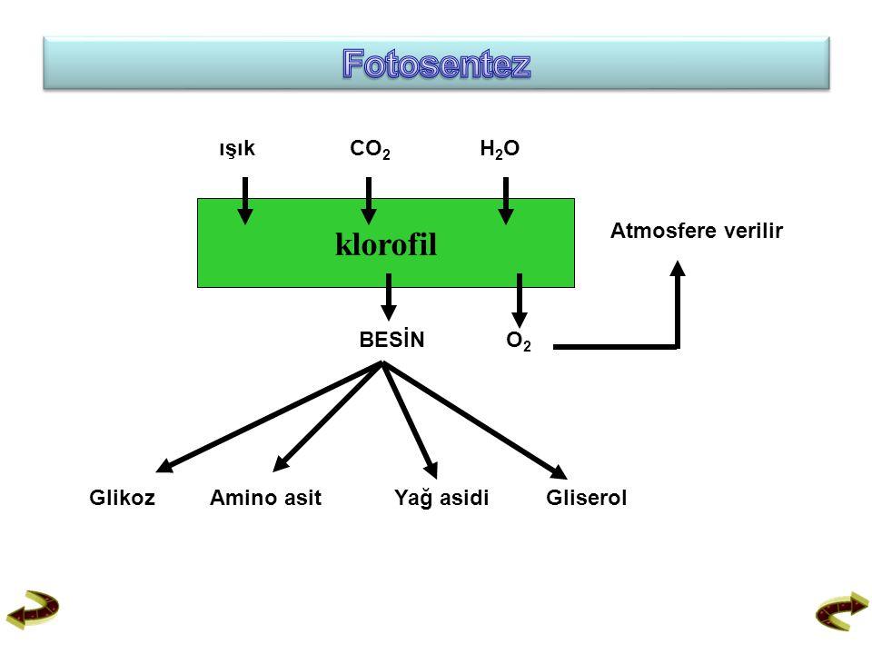 ışıkCO 2 H2OH2O klorofil BESİNO2O2 Atmosfere verilir Glikoz Amino asit Yağ asidi Gliserol