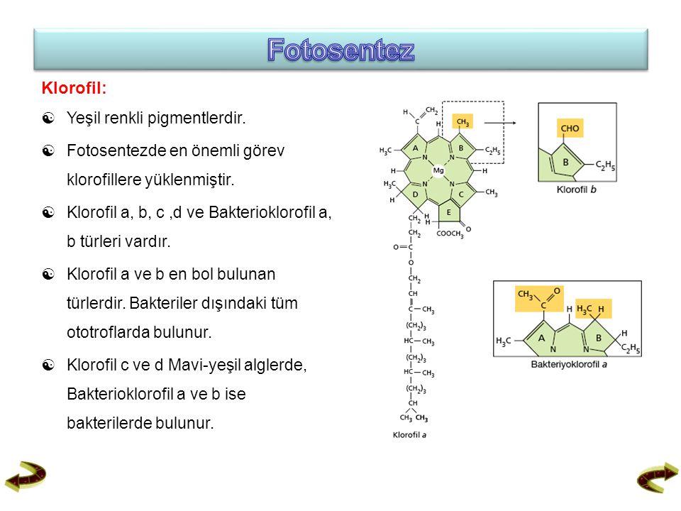 Klorofil:  Yeşil renkli pigmentlerdir.  Fotosentezde en önemli görev klorofillere yüklenmiştir.  Klorofil a, b, c,d ve Bakterioklorofil a, b türler