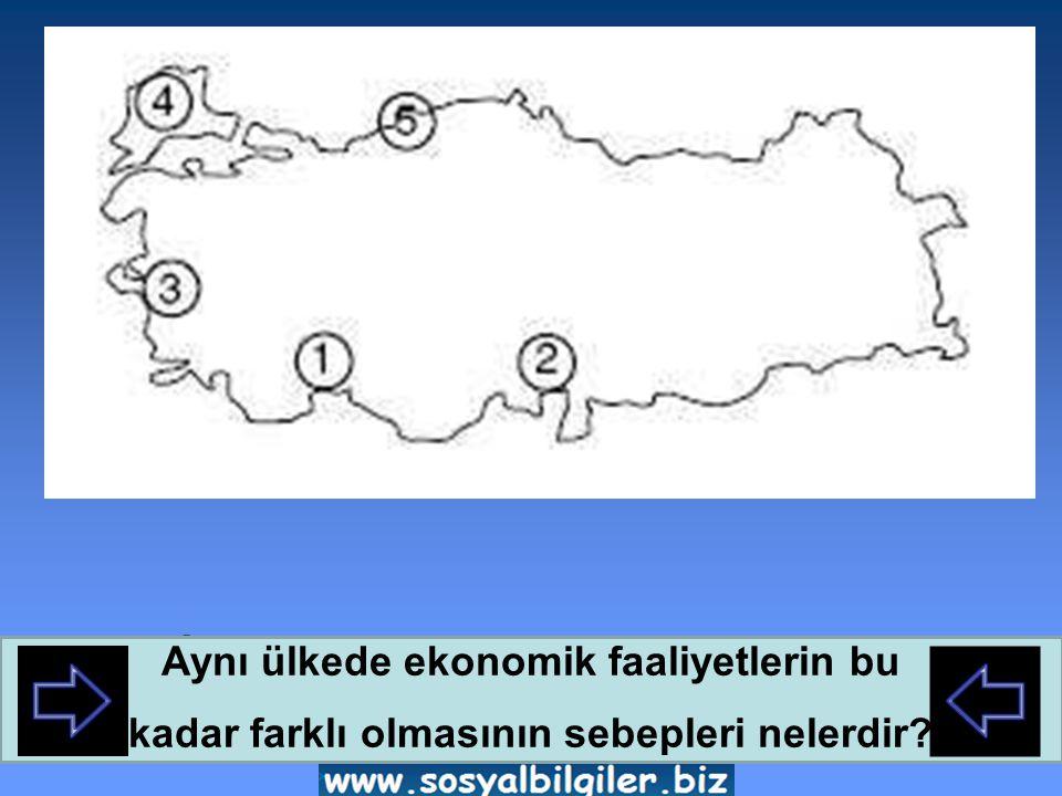 Türkiye Sektörel Dağılımındaki Değişmeler 19802000 Ülkemizde tarım sektöründe nasıl bir değişme olmuştur? Hangi sektörlerde artış vardır? Hizmet sektö