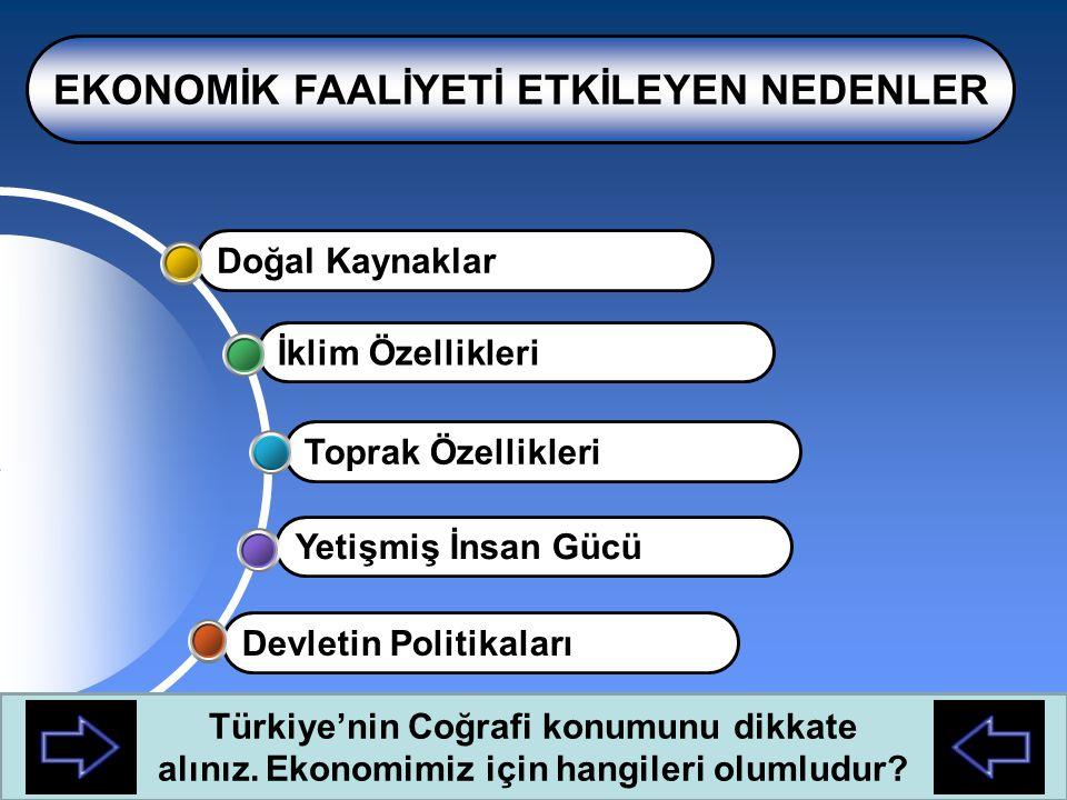 İşaretli alanlarda hangi illerimiz vardır? Bu alanlarda hangi ekonomik faaliyetler ön plana çıkmıştır? Antalya'da turizm yaygın iken Adana'da sanayi n
