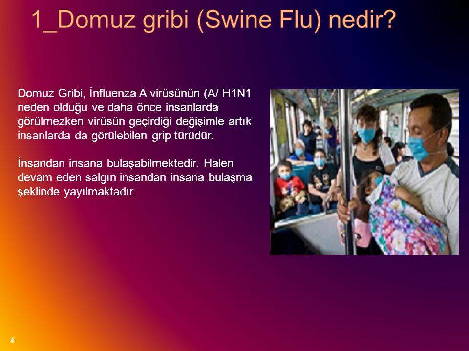 4 Domuz Gribi, İnfluenza A virüsünün (A/ H1N1 neden olduğu ve daha önce insanlarda görülmezken virüsün geçirdiği değişimle artık insanlarda da görüleb