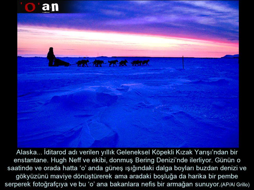 Alaska...İditarod adı verilen yıllık Geleneksel Köpekli Kızak Yarışı'ndan bir enstantane.