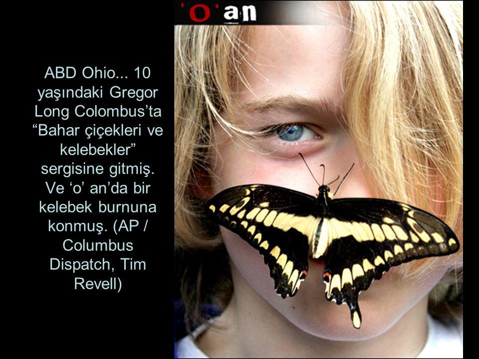 ABD Ohio...10 yaşındaki Gregor Long Colombus'ta Bahar çiçekleri ve kelebekler sergisine gitmiş.