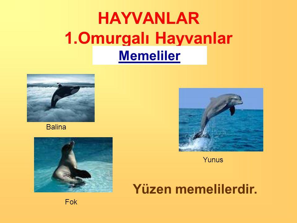 HAYVANLAR 1.Omurgalı Hayvanlar Memeliler YARASA Uçan bir memelidir.