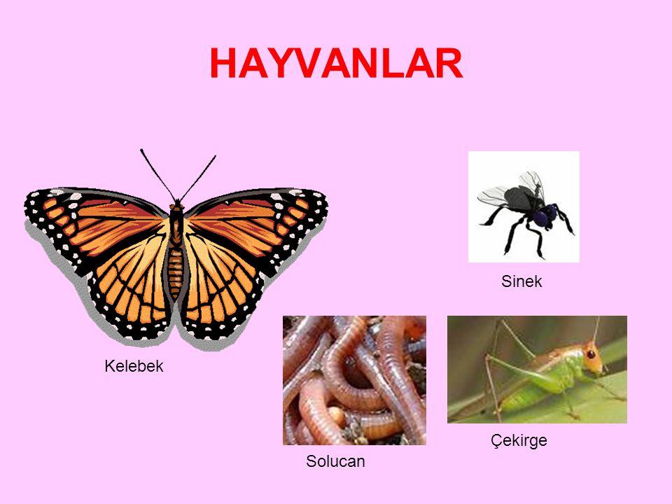 HAYVANLAR 1.Omurgalı Hayvanlar Memeliler Beslenme şekillerine göre; 1.ETLE BESLENENLER: 2.OTLA BESLENENLER: 3.HEM ETLE HEM OTLA BESLENENLER: Koyun, ke