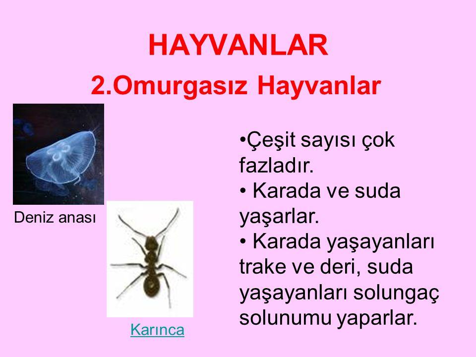 HAYVANLAR 2.Omurgasız Hayvanlar Omurgalı hayvanlardan; •Vücuda desteklik yapan bir omurgaya sahip olamaması •Yaşama şekilleri •Beslenmeleri •Çoğalmala