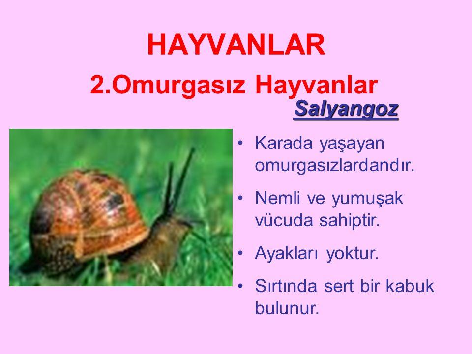 HAYVANLAR 2.Omurgasız Hayvanlar SOLUCANLAR •Nemli bir vücuda sahiptir. •Ayakları yoktur •Toprağın içinde açtığı tünellerde beslenir. •İnsan ve hayvanl