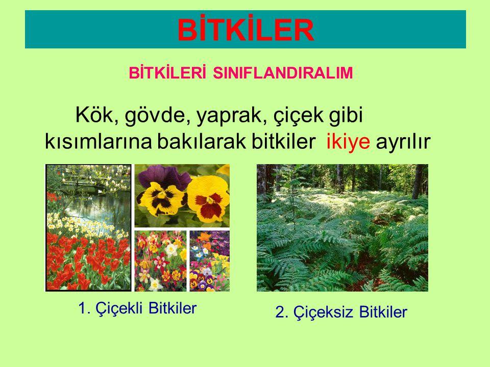 Kök, gövde, yaprak, çiçek gibi kısımlarına bakılarak bitkiler ikiye ayrılır: BİTKİLER BİTKİLERİ SINIFLANDIRALIM