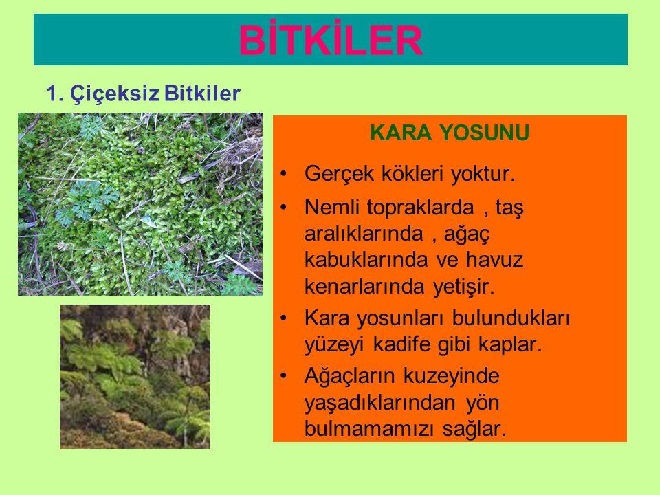 •G•Genelde ilkel bitkilerdir. •Ç•Çiçekleri yoktur. •T•Tohum oluşturmazlar •S•Sporla çoğalırlar. •S•Sayıları çiçekli bitkilere göre daha azdır. •G•Göll