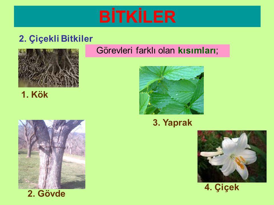 •Gelişmiş bitkilerdir. •Kök,gövde,çiçek ve yaprağa sahiptirler. •Çiçekleri vardır,tohum oluştururlar. •Doğada sayıları çok fazladır. BİTKİLER 2. Çiçek