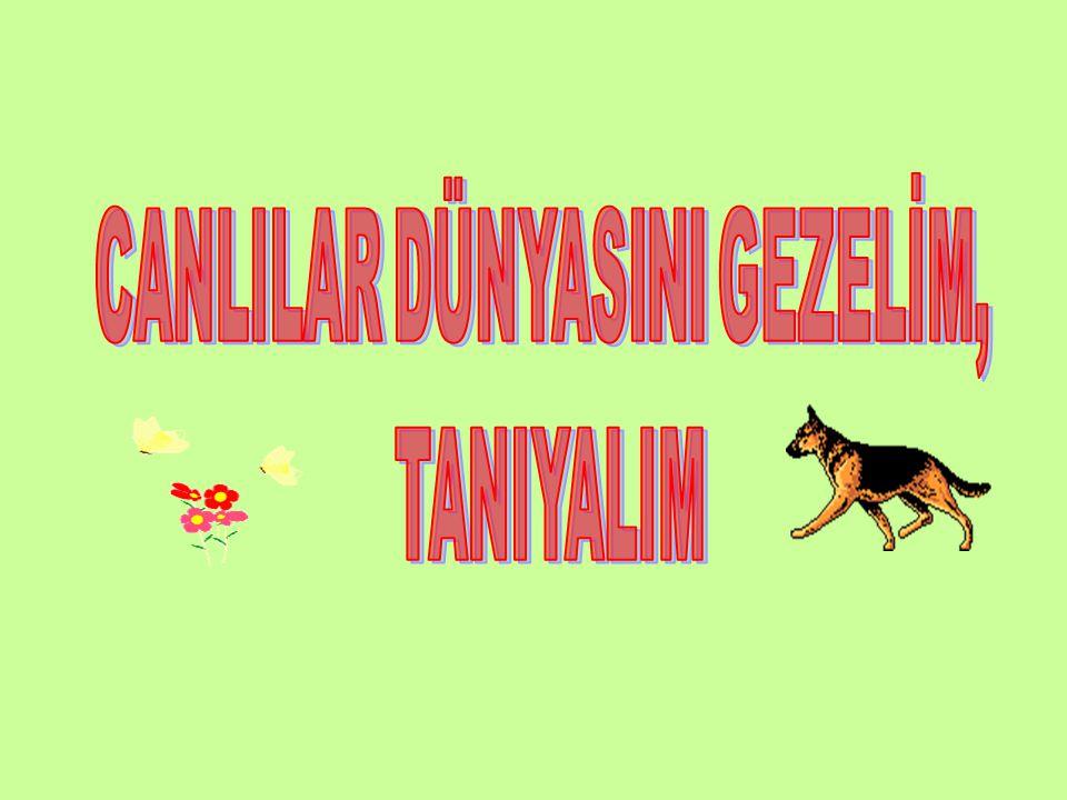 PROJEYİ HAZIRLAYAN Uğur ÖZTÜRK 4163 9/H tarantulaugur@hotmail.com http://paylasbizlerle.yetkinforum.com Bahattin Karlankuş
