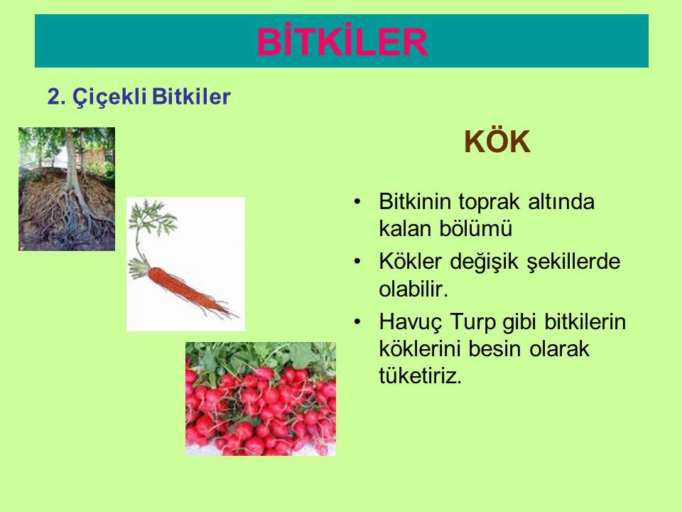 Görevleri farklı olan kısımları; BİTKİLER 2. Çiçekli Bitkiler 1. Kök 2. Gövde 3. Yaprak 4. Çiçek