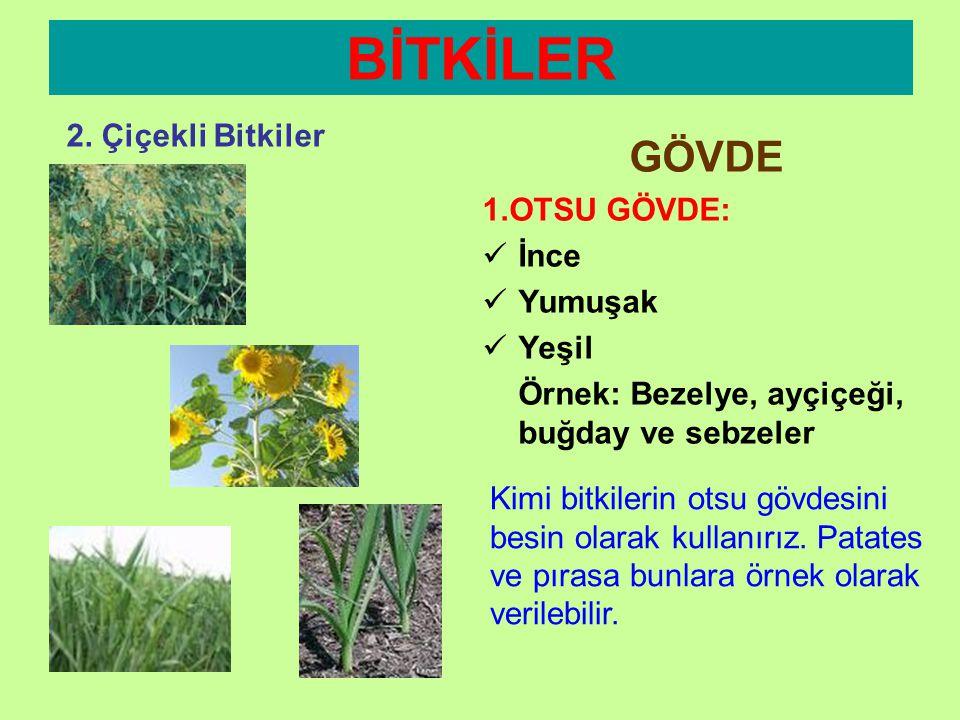 BİTKİLER 2. Çiçekli Bitkiler GÖVDE •Bitkinin toprak üstünde bulunan kısımlarından biridir. •İki çeşit gövde vardır: 1. Otsu Gövde 2. Odunsu Gövde