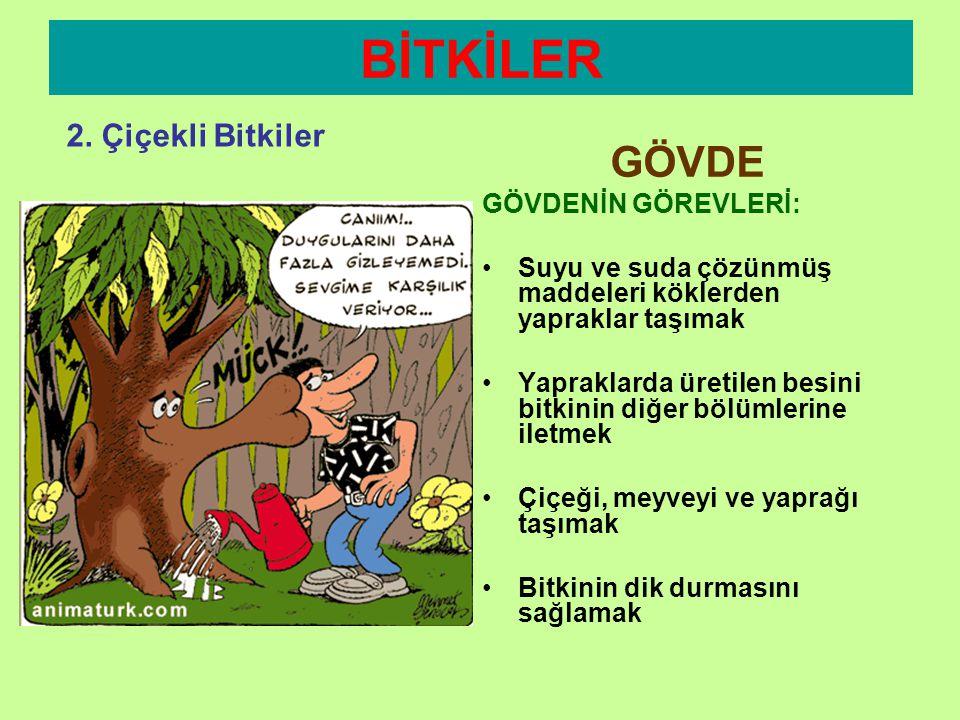 BİTKİLER 2. Çiçekli Bitkiler GÖVDE 2.ODUNSU GÖVDE:  Kalın  Sert  Yeşil renkte değil Örnek: Ağaçlar Odun ve eşya yapımında kullanırızeşya
