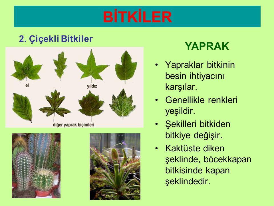 BİTKİLER 2. Çiçekli Bitkiler GÖVDE GÖVDENİN GÖREVLERİ: •Suyu ve suda çözünmüş maddeleri köklerden yapraklar taşımak •Yapraklarda üretilen besini bitki