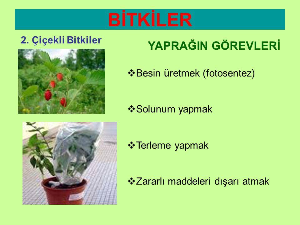 BİTKİLER 2. Çiçekli Bitkiler Yaprak Ayası Damarlar Yaprak Sapı YAPRAK