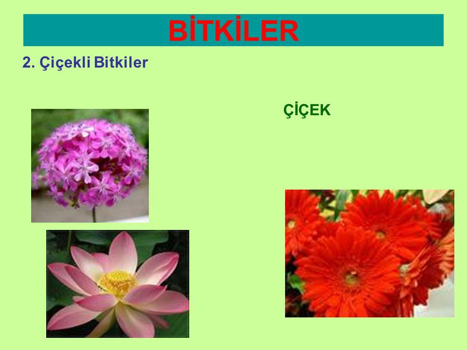 BİTKİLER 2. Çiçekli Bitkiler YAPRAĞIN GÖREVLERİ Zararlı Maddeleri Dışarı Atma •Yaprak dökülmesi sayesinde zararlı maddelerin dışarı atılmasını sağlar.