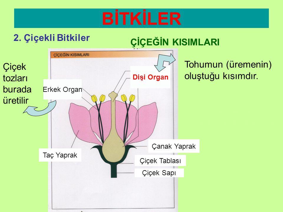 BİTKİLER 2. Çiçekli Bitkiler ÇİÇEĞİN KISIMLARI Erkek Organ Dişi Organ Taç Yaprak Çanak Yaprak Çiçek Tablası Çiçek Sapı Çiçek tozları burada üretilir T